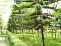 Wisata Hutan Kota Malabar Malang