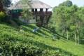 Wisata Kebun Teh Wonosari Malang